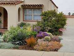 No lawn required: a vibrant and colorful front yard of succulents, cacti and drought-tolerant plants. Succulent Landscaping, Landscaping Ideas, Succulents For Sale, Drought Tolerant Landscape, Front Yard Fence, Water Plants, Curb Appeal, Landscape Design, Lawn