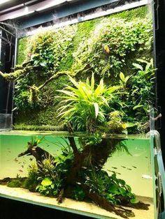 21 Best Aquascaping Design Ideas to Decor Your Aquarium - Tips Inside - homelovers Aquarium Terrarium, Aquarium Aquascape, Nature Aquarium, Aquariums, Saltwater Aquarium, Freshwater Aquarium, Aquarium Fish, Tropical Aquarium, Vivarium