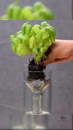 Diy plant self watering - Pflanzideen Indoor Garden, Indoor Plants, Outdoor Gardens, Hanging Herb Gardens, Vertical Herb Gardens, Small Water Gardens, Container Water Gardens, Indoor Vegetable Gardening, Mini Plants