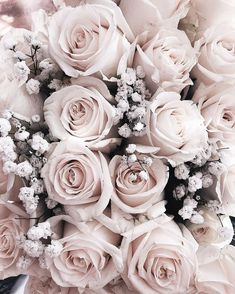 Wallpaper Backgrounds Aesthetic - Bloom - Wallpapers World Bunch Of Flowers, Summer Flowers, Dried Flowers, Colorful Flowers, White Flowers, Beautiful Flowers, Flowers Garden, Cut Flowers, Pink Roses