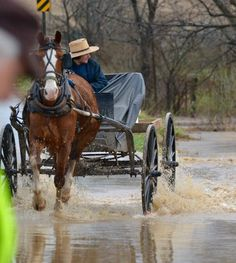 Amish buggy driving through flooded road
