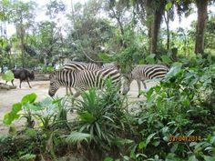 Indiana, Singapore, Animals, Animales, Animaux, Animal, Animais