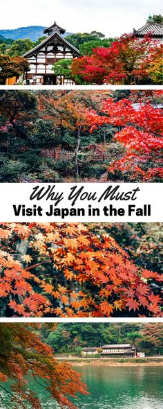 Why You Must Visit Japan in the Fall