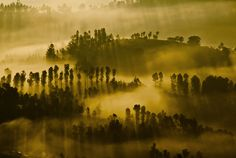 The Dawn by Ashish Sharma