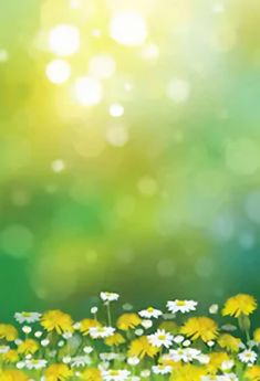 Our spring backdrops are great additions to your photo shoot. Spring becautiful flowers at different colors, green grass. Best spring backdrops are here! Easter Backdrops, Muslin Backdrops, Custom Backdrops, Photography Backdrops, Photography Photos, Green Grass Background, Yellow Tulips, Easter Colors, Backdrop Stand