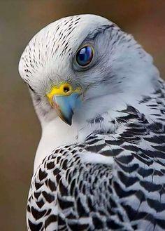 Bird Of Prey Photography Raptors Ideas Kinds Of Birds, All Birds, Birds Of Prey, Love Birds, Pretty Birds, Beautiful Birds, Animals Beautiful, Exotic Birds, Colorful Birds