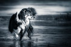 VIEW Fotocommunity Pictures, Animal Photography, Photographers, Animales