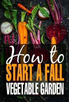 Fall Vegetables, Organic Vegetables, Growing Vegetables, Gardening Vegetables, Growing Tomatoes, Growing Carrots, Veggies, Organic Fruit, Backyard Vegetable Gardens