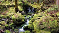 Nature, Wood, Moss