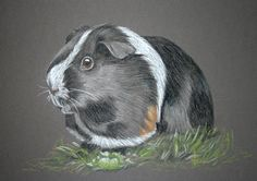 Rabbit Portraits and other small Animal Portraits