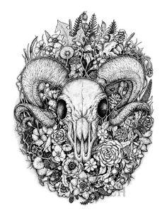 1000 Ideas About Ram Skull On Pinterest Cat Skull
