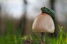 razzberrypie:  Toadstool