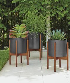 Room & Board - Case Study Ceramics® Planters with Wood Stand - Modern Planters - Modern Entryway Furniture Front Porch Planters, Patio Planters, Modern Planters, Ceramic Flower Pots, Ceramic Planters, Decorative Planters, House Plants Decor, Plant Decor, Front Garden Landscape