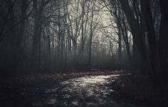 Misty Path by Jessica Heller on 500px