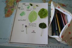 Another example of nature journaling to share with the kids.