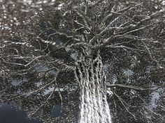 tree made with umbrella - Google Search