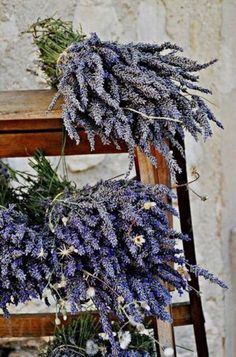 Lavender stems as a mosquito repellent -- scatter stems among embers of a campfire to release a smoldering scent Lavender Cottage, Lavender Tea, French Lavender, Lavander, Lavender Fields, Lavender Crafts, Pot Plante, Malva, Shades Of Purple