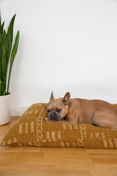 17 Stylish Boho Dog Beds You Your Fur Kids Will Love - Mustard tribal mudcloth dog bed cushion from Shop Cocody on Etsy, Tan Frenchie, French Bulldog. Cute Dog Beds, Puppy Beds, Dog Beds For Small Dogs, Diy Dog Bed, Pet Beds, Cute Dogs, Best Dog Beds, Designer Dog Beds, Dog Shop
