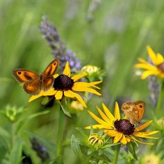 Cute Butterfly, Moth, Insects, Bee, Animals, Honey Bees, Animales, Animaux, Bees