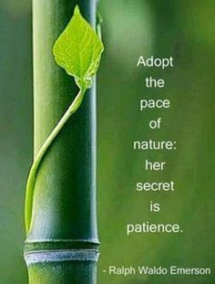 Embracing the nature's secret ... Patience <3