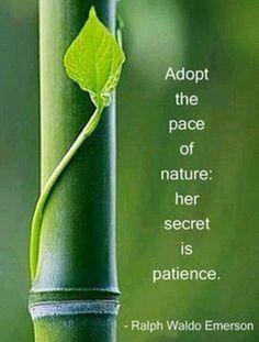 Embracing the nature's secret ... Patience <3