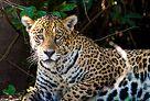 www.naturetrek.co.uk landingpage.aspx?url=wildlife-holidays-in-brazil