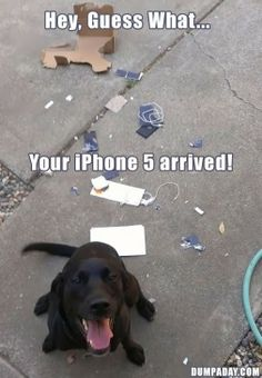Google+ Labrador + New Phone