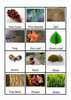 What about gluing these items to pieces of plastic for a nature box. Montessori Printables | Montessori Nature