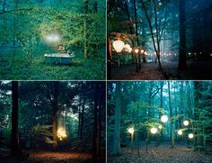 lights in the woods