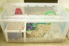 Cool bin cage with shelf! Cool bin cage with shelf! Cool bin cage with shelf! Dwarf Hamster Cages, Hamster Bin Cage, Hamster Life, Hamster Habitat, Hamster Toys, Gerbil Cages, Plastic Hamster Cage, Hamster Stuff, Hedgehog Cage