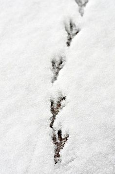 foot prints in the snow...definitely a road less traveled