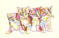 Rainbow Kitten Art