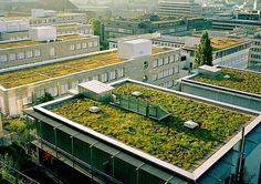 Boas notícias são sempre bem vindas. Desde novembro de 2015 é lei em Paris: os prédios comerciais devem ter telhados verdes ou placas solares. Essa medida da Cidade Luz é a semente da mudança que os grandes centros urbanos precisam. . #olhardemahel #paris #telhadoverde #placasolares #arquiteturaedesign #law #goodidea #mudançadehábitos #politicaverde #greenideas #news #pacontecimentos #instanews #instagram