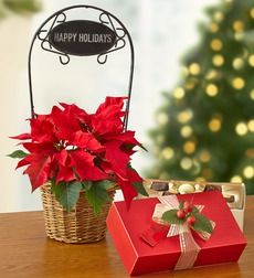 """Happy Holidays Poinsettia - Happy Holidays Poinsettia - Small with Chocolate. With charm and elegance, the red poinsettia is one of the most iconic symbols of the season. Ours arrives in a brown wicker basket complete with a removable metal """"Happy Holidays"""" sign, making it ideal for all your holiday gatherings. Festive red poinsettia plant arrives fresh and blooming in a wicker basket 4"""" poinsettia arrives in basket measuring 6""""H Comes with removable """"Happy Holidays"""" sign Add a sweet treat…"""
