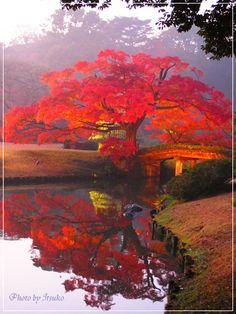 六義園・紅葉 Rikugien autumn leaves