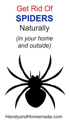 How To Get Rid Of Spiders Naturally In Your Home And Outside