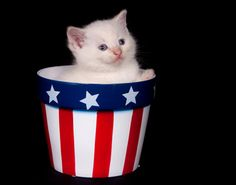 Happy Fourth of July! Here Are the 8 Most Patriotic Kitties on Shutterstock   Catster