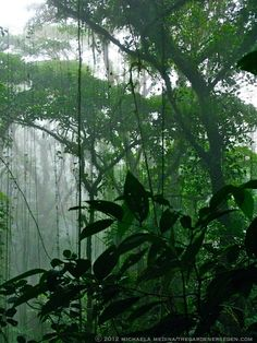 So happy to see this image from the Monteverde Cloud Forest in Costa Rica -- I didn't get any shots as great as this while I was there.