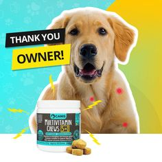 You wont believe what naturally occurring ingredients can help extend your dogs life! Animals And Pets, Baby Animals, Funny Animals, Cute Animals, Pet Dogs, Dogs And Puppies, Dog Items, Pet Health, Dog Care