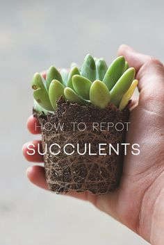 The first two months are the hardest to keep your succulents alive! Here are 7…