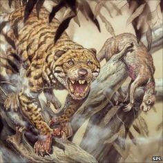 Marsupial lion Thylacoleo, Mark Hallett