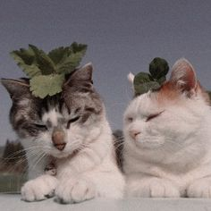 Pretty Cats, Beautiful Cats, I Love Cats, Cool Cats, Cats Are Assholes, Baby Animals, Cute Animals, Cat Aesthetic, Puppies And Kitties