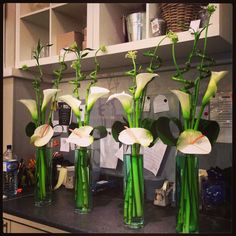 Arums and anthuriums