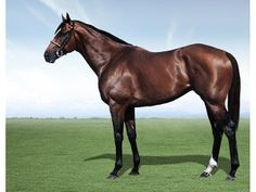 South African champion stallion and South African champion racehorse, Jet Master, is a legend of South African horse racing. Purchased for only R15,000 as a weanling, Jet Master, went onto win 17 of 24 races in his racing career. Jet Master, as a stallion, produced progeny such as Pocket Power, River Jetez, J J the Jet Plane and many others, that would become champion racehorses in South Africa and abroad. He tragically died at the age of 18 years old, contracting the rare West Nile virus.