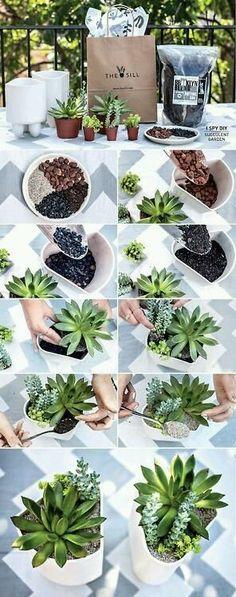C&S (Cactus & Suculentas) - Community - Google+Amy AcarBra