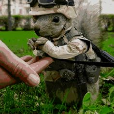 Military Trained Squirrel