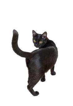 Cats Afraid Of Cucumbers Black Cat Aesthetic, Manga Cat, Cat Anatomy, Cat Reference, Japanese Cat, Animal Bones, Cat Behavior, Cat Crafts, Cat Walk