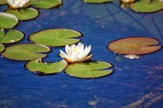 Jemina Staalon Veden vuosi 2: Veden vuosi: vedenpisarassa koko maapallo