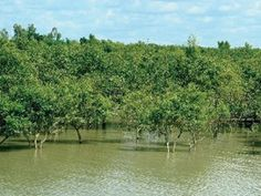 World Bank Report: Sunderbans embankments cannot withstand storm surges