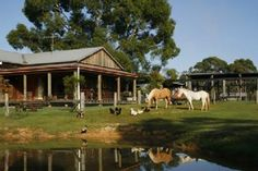 """A property in the Hunter where you can take grapes straight off the vine and a Mudgee farm that """"connects kids to animals"""" are some of the best family farmstays in New South Wales."""